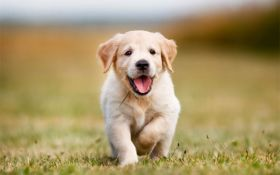 seguro-mascotas