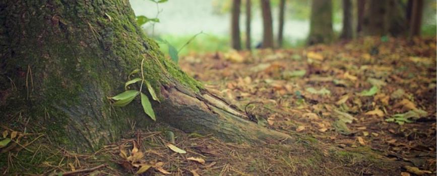 seguros forestal